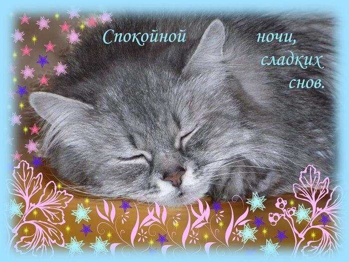 кот с сообщением